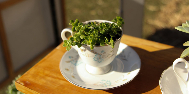 Upcycled tea cup used as a plant vase